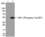 AP55834PU-S - HCLS1
