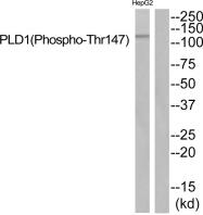 AP55835PU-S - Phospholipase D1 / PLD1