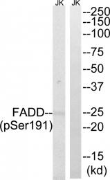 AP55837PU-S - FADD