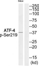 AP55845PU-S - ATF4
