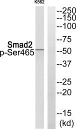 AP55851PU-N - SMAD2