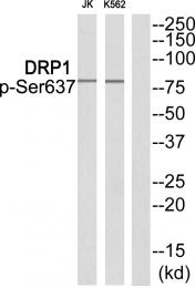 AP55855PU-N - Dynamin-1-like protein