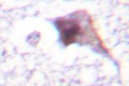 AP06092PU-N - E2F6