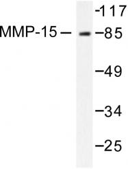 AP06228PU-N - MMP-15