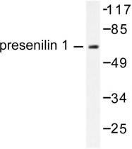 AP06290PU-N - Presenilin-1