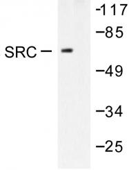 AP06323PU-N - SRC1