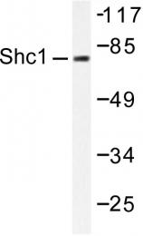 AP06411PU-N - SHC1 / SHC