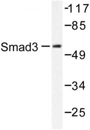 AP06414PU-N - SMAD3