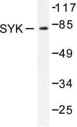 AP06416PU-N - SYK