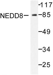 AP06450PU-N - NEDD8