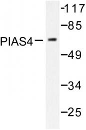 AP06455PU-N - PIAS4