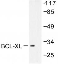AP06498PU-N - Bcl-2-like 1