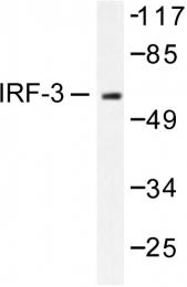 AP06528PU-N - IRF3