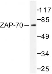 AP06596PU-N - ZAP70