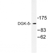 AP06741PU-N - DAG kinase delta