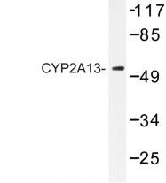 AP06775PU-N - CYP2A13