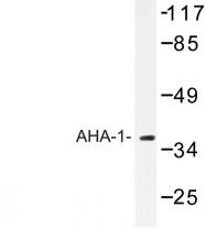 AP06790PU-N - AHA1 / AHSA1