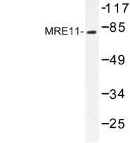 AP06803PU-N - MRE11