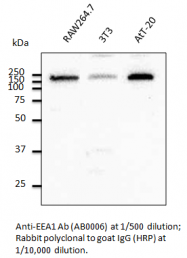 AB0006-200 - Early endosome antigen 1