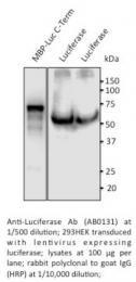 AB0131-200 - Luciferase