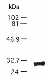 AF2310 - TIMP1