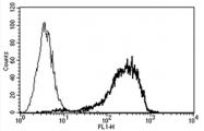 AM03022AF-N - CD138 / Syndecan-1