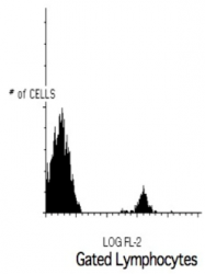 AM05180RP-N - CD19