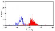 AM05588RP-N - CD172a / SIRPA