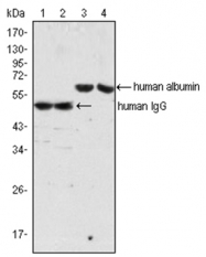 AM06072PU-N - Human IgG