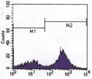 AM06093PU-N - CD247 / CD3Z