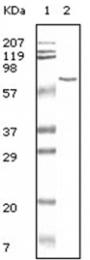 AM06098PU-N - Albumin