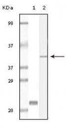 AM06136SU-N - CIB1