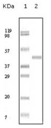 AM06165SU-N - ABL2