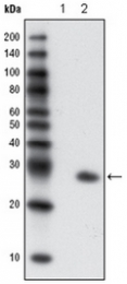AM06180PU-N - GFP