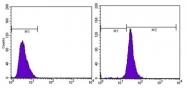 AM06276SU-N - Actin beta / ACTB