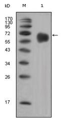 AM06322SU-N - CD334 / FGFR4