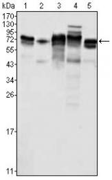 AM06379PU-N - MTDH