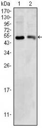 AM06382SU-N - BDH1