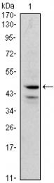 AM06444SU-N - GATA1