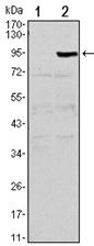 AM06550SU-N - Osteoprotegerin / TNFRSF11B