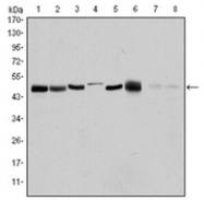 AM06573SU-N - Aurora kinase A