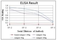 AM06592SU-N - HPV16 E7 protein