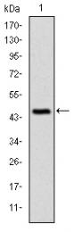 AM06661SU-N - CBL / RNF55