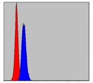 AM06675SU-N - Prohibitin / PHB
