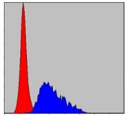 AM06682SU-N - Fibrinogen gamma chain