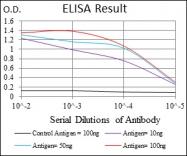 AM06695SU-N - BMI-1 / RNF51