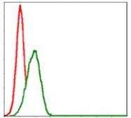 AM06698SU-N - Myelin Basic Protein