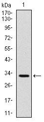 AM06728SU-N - CD30