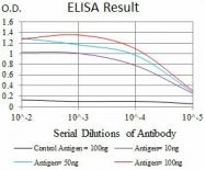 AM06775SU-N - Kallikrein-3 / PSA / KLK3