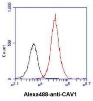 AM09383PU-N - Caveolin-1